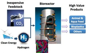 biotech CO2 reduction
